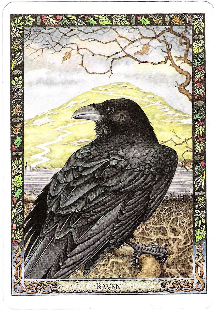 Bran And Branwen, Three Unfortunate Disclosures And Ravens